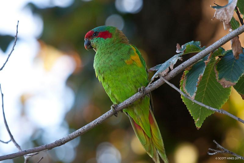 IMAGE: http://shines.smugmug.com/Nature/Fauna/IMG1387/1220685283_jivZm-L.jpg